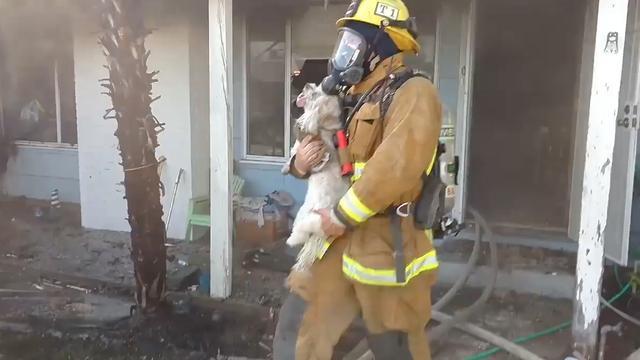 Amerikaanse brandweer redt bewusteloos hondje uit brandend huis