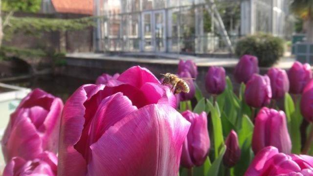 Imkerdagen in Leiden Hortus