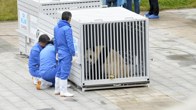 Reuzenpanda's vertrekken vanuit China naar Nederland