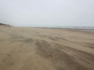 Man wilde op zand landen