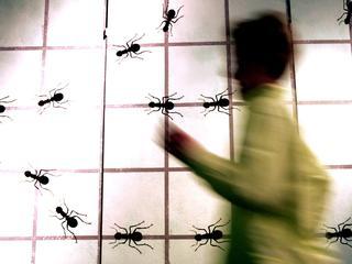 Insecten slepen grote kruimels achterstevoren naar hun nest