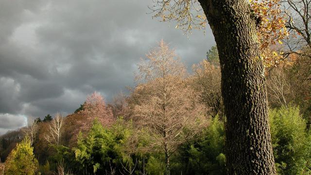 Gemeente Woensdrecht wil dertig bospaden aan openbaarheid onttreken