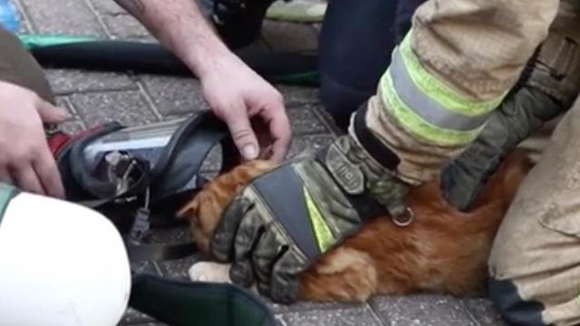 Katten gered bij grote brand Rotterdam