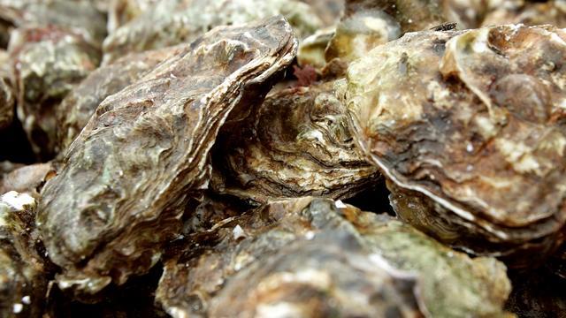 Economische Zaken pakt oester-herpesvirus aan