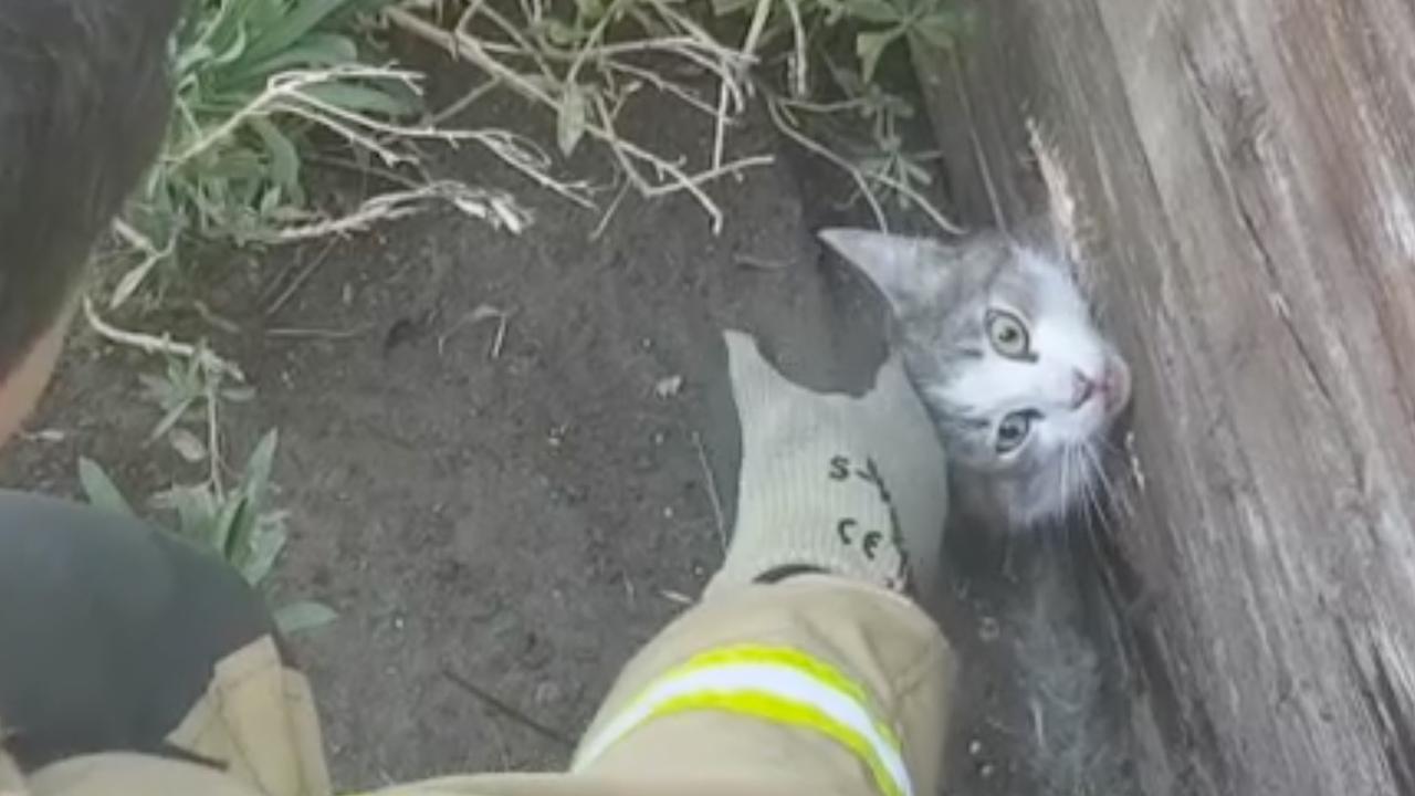 Brandweer redt kat uit muur in Alblasserdam