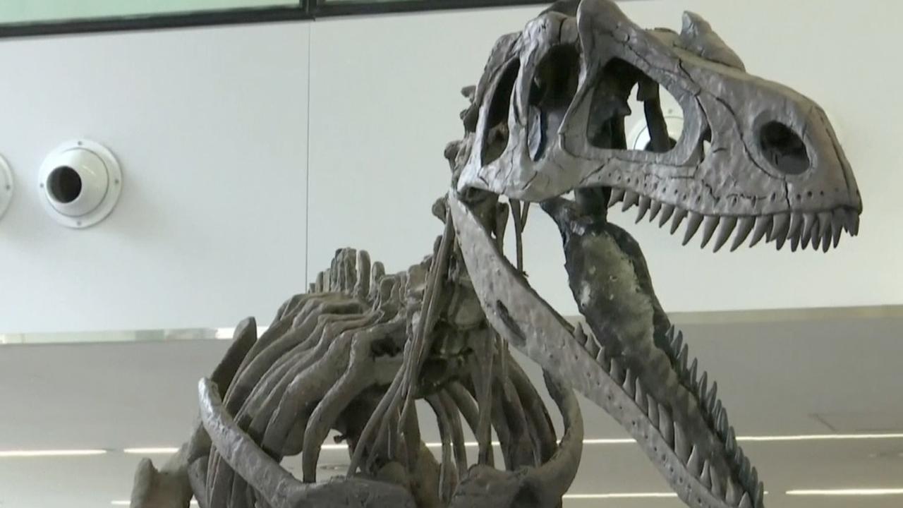 Fossielen van nieuwe dinosaurus gepresenteerd in Argentinië