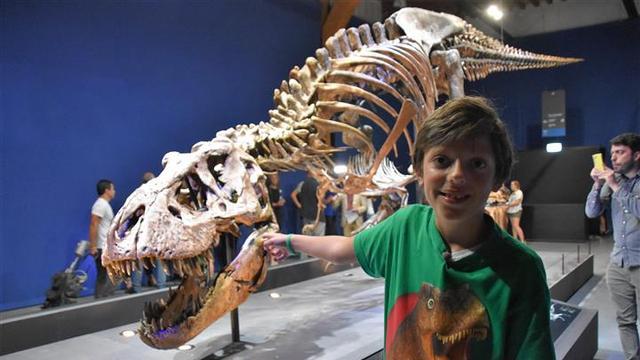 Tyrannosaurus Trix eindelijk te zien voor publiek
