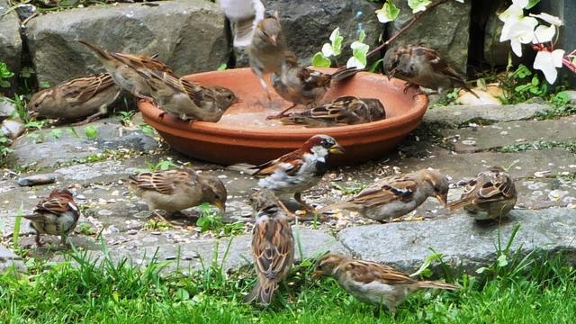 Tuinvogels geteld tijdens jaarlijkse vogeltelling