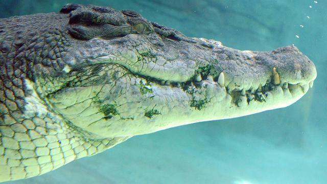 Australische deelstaat vreest krokodillen door overstromingen