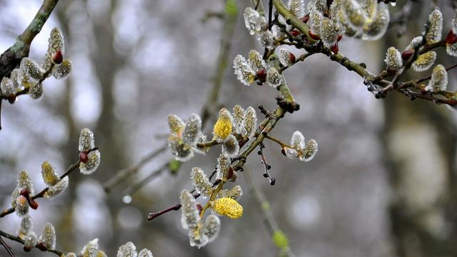 'Komende week koude meivakantie in Alphen'