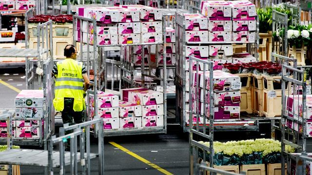 'Polen belangrijkere afzetmarkt voor Nederlandse bloemen'