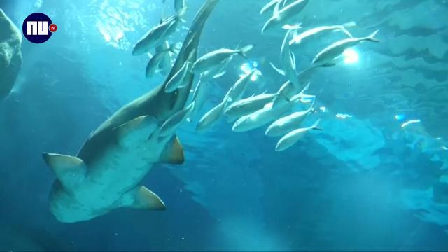 Grootste aquarium van Zuid-Amerika staat in Rio de Janeiro