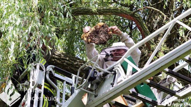 Flinke bijenkolonie verwijderd in Asserstraat