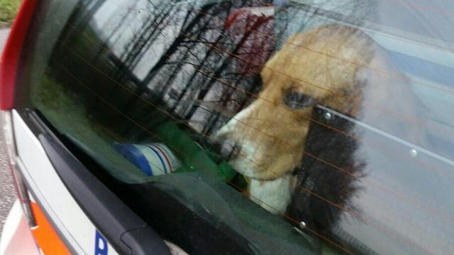 Coentunnel enige tijd gesloten vanwege loslopende honden