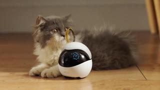 Autonome robot speelt met je kat als je niet thuis bent