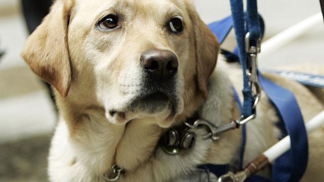 Vrouw ernstig gewond na aanrijding tijdens uitlaten hond