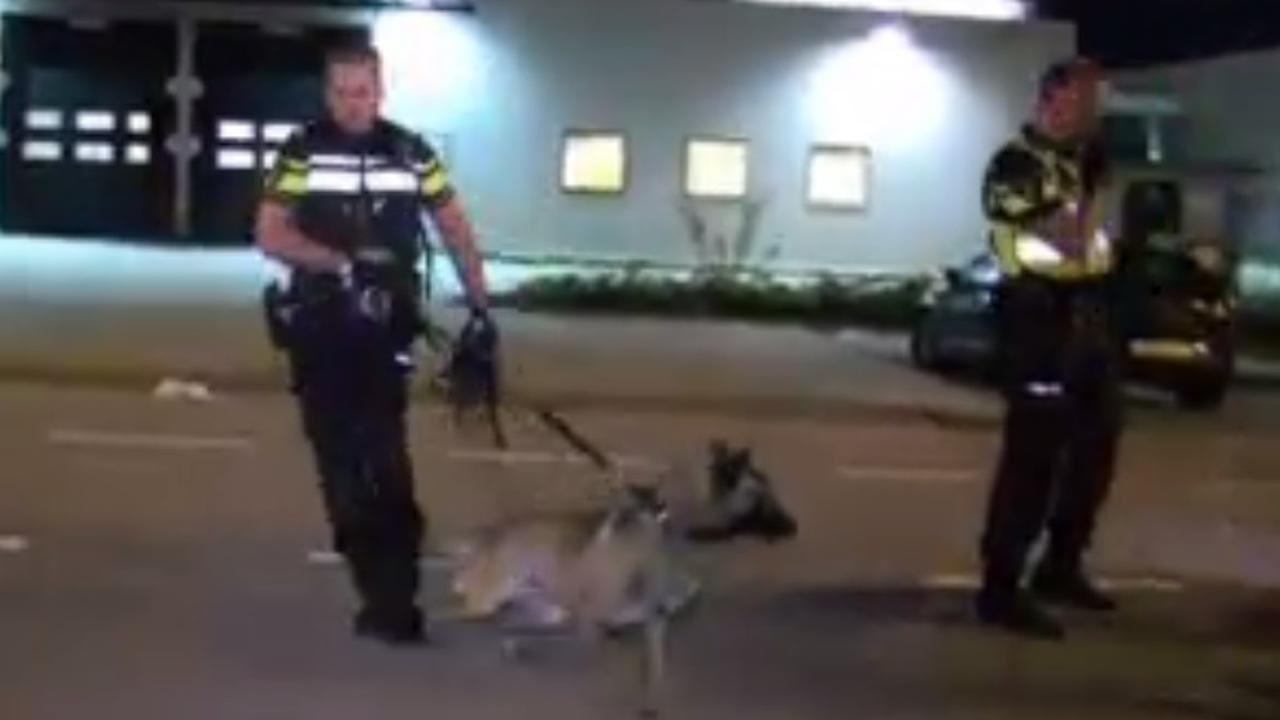 Inbreker gebeten door politiehond in Amsterdam-Noord