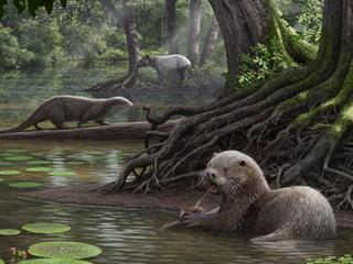 Dier leefde 6 miljoen jaar geleden en was even groot als een wolf