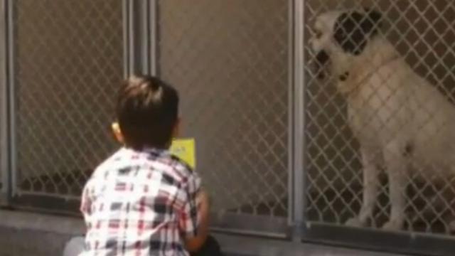 Autistische jongen (6) leest voor aan asielhonden