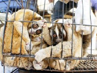 Zeldzame dieren populair door internetfilmpjes
