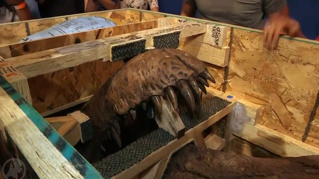 Skelet opgegraven Tyrannosaurus rex aangekomen in Naturalis