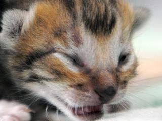 Onbekende vrouw gooide kooi met katten voor deur af