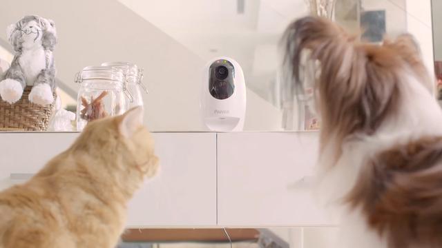 Pawbo+ laat eigenaren op afstand met huisdier spelen
