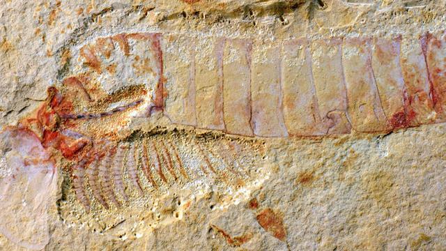 Dinosaurusstaart met veren gevonden in stuk amber