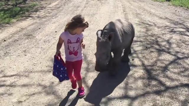 Meisje laat kleine witte neushoorn uit in Kenia
