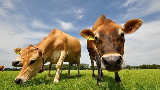 Provincie Brabant beslist over aanpak overlast veehouderij