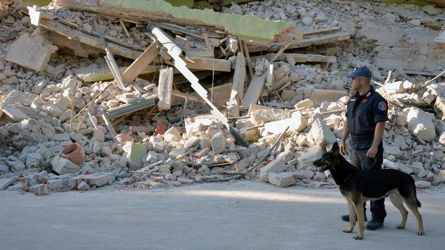 Katten vijftien dagen na aardbeving Italië onder puin vandaan gehaald