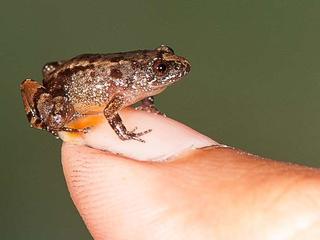 Nachtdiertjes zijn zo klein dat ze op een vingernagel passen
