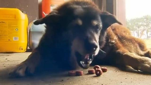 Oudste hond ter wereld op 30-jarige leeftijd overleden
