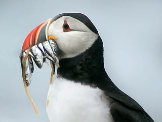Vogels spoelen sporadisch aan tijdens stormachtig weer