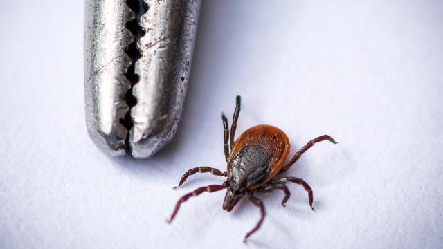 Ouderen hebben meer kans op ziekte van Lyme