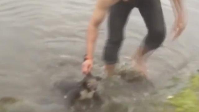 Australische man redt verdrinkende koala