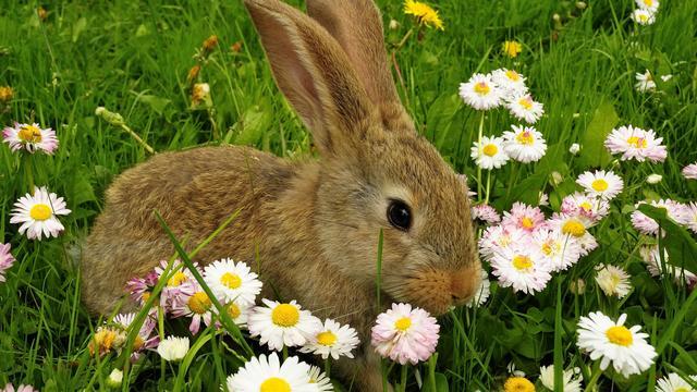 Onbekende dumpt konijntjes op parkeerterrein ARC