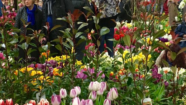 Binnenstad vrijdag in teken van Bloemenjaarmarkt