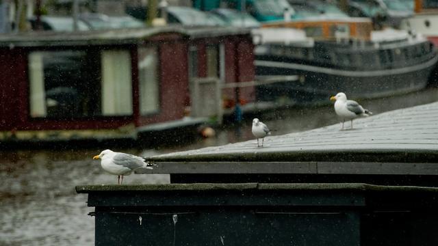 Woonboot zinkt in Brouwersgracht