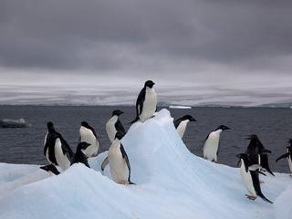 In oosten van Antarctica leven naar schatting 5,9 miljoen adeliepinguïns