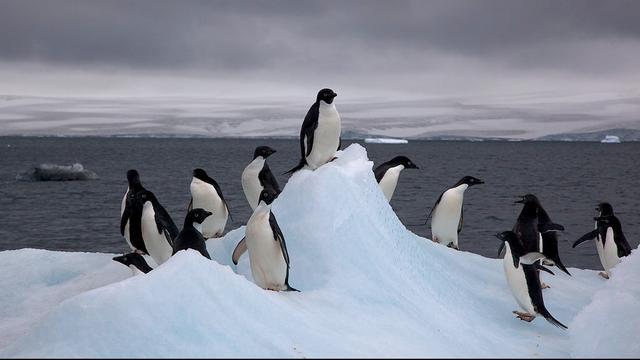 Zuidpool telt miljoenen pinguïns meer dan gedacht