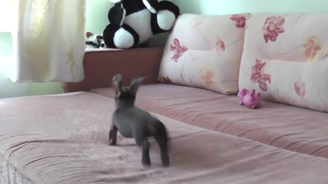 Deze blije hond mag voor het eerst op bed