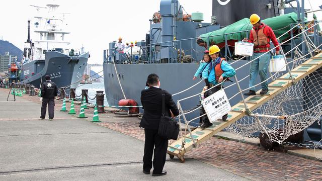 Japanners vangen meer dan driehonderd walvissen