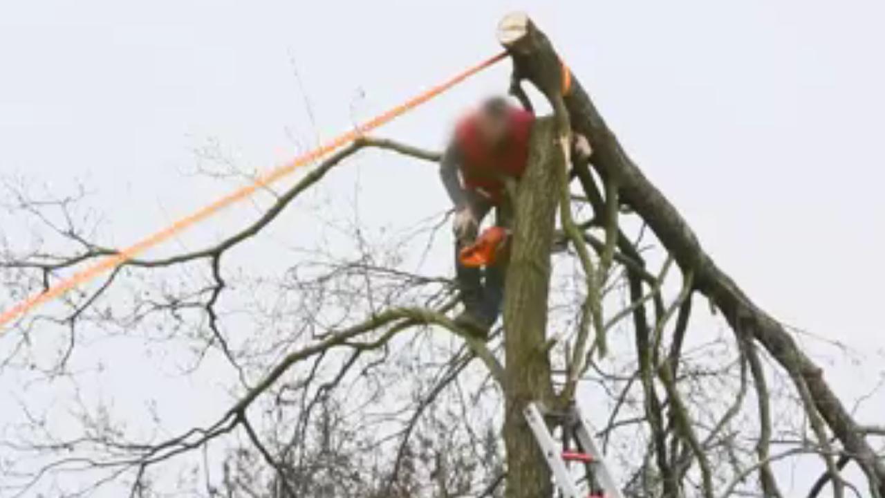 Brandweer helpt beknelde man uit boom in Friesland