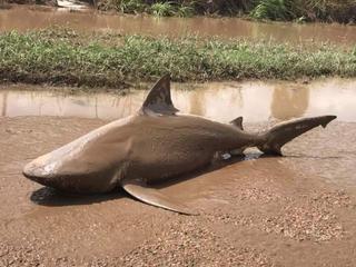 Brandweer waarschuwt voor onverwachte dieren in vloedwater