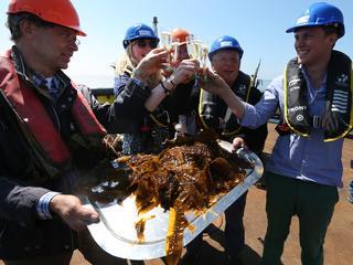 Expert beantwoordt vier vragen over zeewier