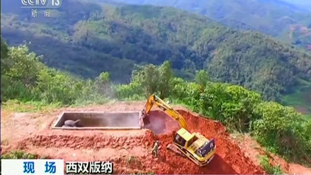 Olifanten gered uit waterreservoir China