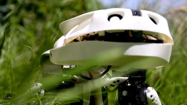 Zwitserse wetenschappers ontwikkelen 'robotsalamander'