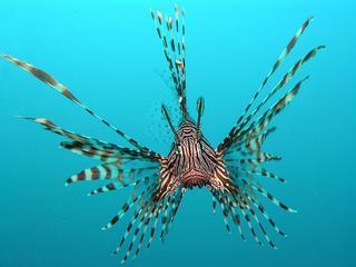 Tropische dieren eten grote aantallen jonge vissen