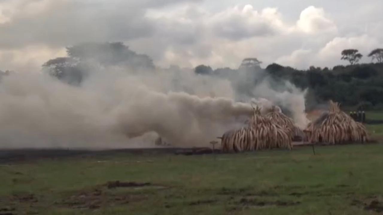 Kenia verbrandt recordhoeveelheid ivoor